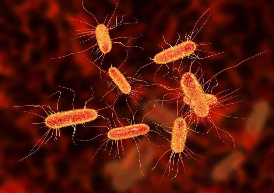 نکته بهداشتی ، پیشگیری از عفونت ای کولای